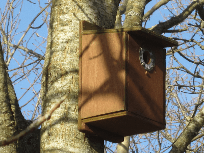 Installation of bird boxes around the site