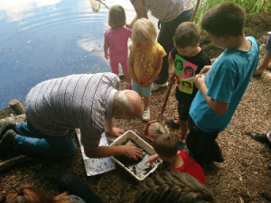 Pond Dipping 2